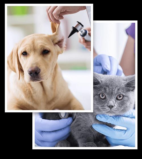 conseils-medecine-generale-chirurgie-soins-dentaire-veterinairebrillon-crisnee