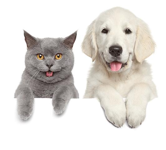 pathologie-prevention-conseils-medecine-generale-chirurgie-soins-dentaire-veterinairebrillon-crisnee